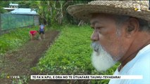 TH : La famille Tevaearai, agriculteurs de pères en fils à Vairao