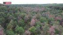 Les forêts françaises victimes de la sécheresse