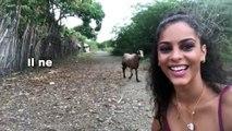 Il ne fallait pas tenter de faire un selfie avec cette chèvre...