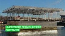Rotterdam abrite la première ferme laitière flottante au monde