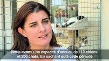 A Plaisir, la SPA peine à gérer l'afflux d'animaux abandonnés