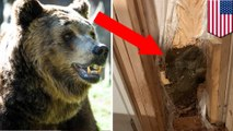 Bear breaks into house, leaves by smashing through wall
