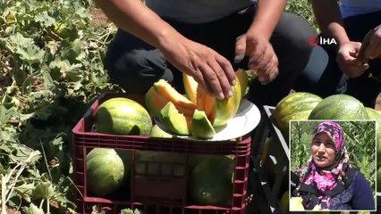 İlginç Meyve! Şekli Kavuna Tadı Muza Benziyor