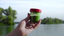 How to Protect Your Dog from Toxic Algae