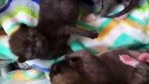 Cute cats from California!!