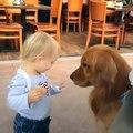 Ce Petit garçon aide un petit chien. Trop mimi !