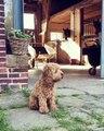Cet adorable petit chien veut garder les chevaux. Mignon !!