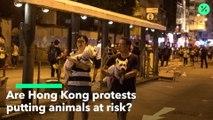 Protestas de Hong Kong afectan a los animales