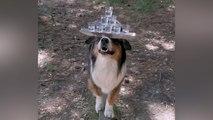 Beeindruckend: Hund balanciert mit Gläsern auf der Nase