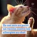 Bientôt un traitement pour éviter que votre chat vous rende allergique ?