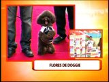 Pets to join 'Flores de Doggie'