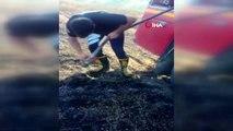 Yangından kurtarılan kaplumbağanın suyla buluşma anı kamerada