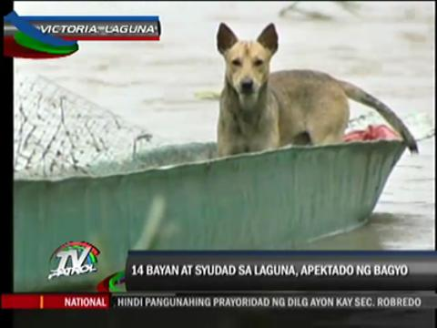 Farms, houses in Laguna under water due to 'Basyang'