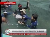 Dolphin saved after being trapped in fish pen
