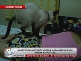 Marc Logan reports: Kitten massages on YouTube