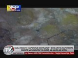 Kabayan Special Patrol: 'Coco-lisap' threatens coconut industry