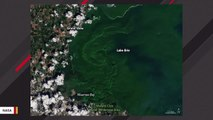 Toxic Lake Erie Bloom Can Be Seen From Space