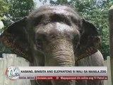 Hero dog Kabang visits elephant Mali