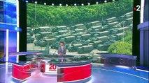 Hong Kong : l'armée chinoise se déploie près de la frontière