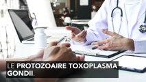 La toxoplasmose, c'est quoi ?