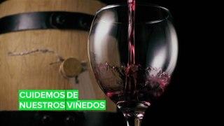 El cambio climático está afectando al vino