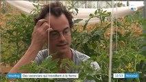 Woofing : travailler dans des fermes en échange du gîte et du couvert