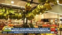 Ag Report: Fighting rural farm crime; banana disease; and ag grant award