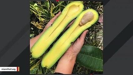'Long Neck' Avocados Anyone?