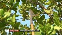 """NOIX DE CAJOU .. Je viens d' être """"censuré"""" par """"YouTube"""" .. ADIEU à MES HUIT MILLE SIX CENT SOIXANTE SEIZE """"ABONNéS""""  (8676 """"Abonnés"""") DE MA PRINCIPALE """"PAGE-CHAÎNE/YOUTUBE"""" .."""
