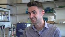 Gjuha artificiale, mund të dallojë ndryshimet mes uiskit të ndryshëm