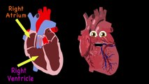Heart Anatomy Song for Kids Anatomy for Kids==)(