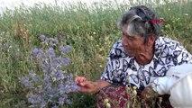 HAKKARİ Muğlalı kadın arıcı 27 yıldır Yüksekova'da arıcılık yapıyor