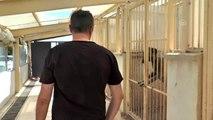 Fikret Orman'ın Kangal köpeği sevgisi - SİVAS