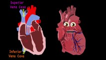 Heart Anatomy Song for Kids Anatomy for Kids+++===