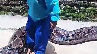 Cet enfant joue avec un serpent python géant !