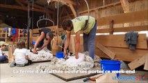 Tonte de chèvres à la ferme d'Amalthée