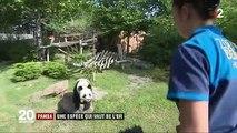 Zoo de Beauval : des pandas qui font recette
