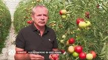 Consommation : pourquoi les tomates n'ont-elles plus de goût ?