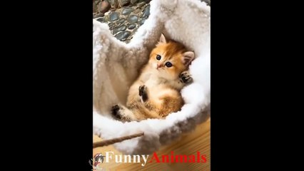 Funny Cat and Cute Kitten Videos - Cat Vines Compilation