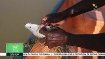 Zona Verde: Conservación de la vida salvaje en África