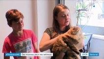 Le pet-sitting, un moyen de lutter contre l'abandon des animaux domestiques