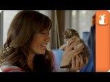 Kitty Adoption - Barely Pet Parents