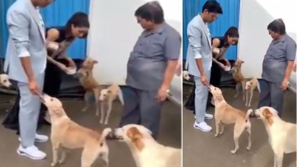 Shraddha Kapoor shows love for street dogs; Watch video | FilmiBeat
