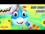 Baby Shark Learn Colors | Baby Shark Mid Autumn Festival | Nursery Rhymes & Cartoon Songs for Kids