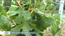 Météo : des orages de grêle font d'importants dégâts dans le Beaujolais