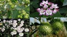 घर में पैसों को बरसात कराएंगे ये 4 पौधे | 4 Plants for CASH Flow | Boldsky