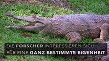 Mit dieser spannenden Technik kommen Krokodile ums Zähneputzen drum herum