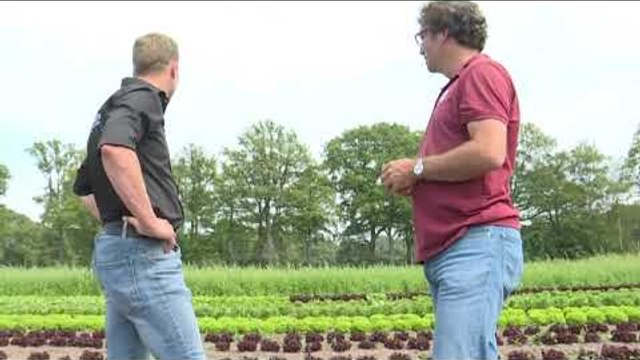 Ndryshimet e klimës/ Holanda drejt fermave kolektive