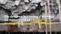 Enquête L214 dans un élevage de lapins des Deux-Sèvres