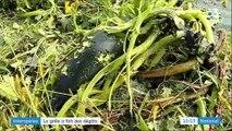 Rhône : la grêle a fait des dégâts